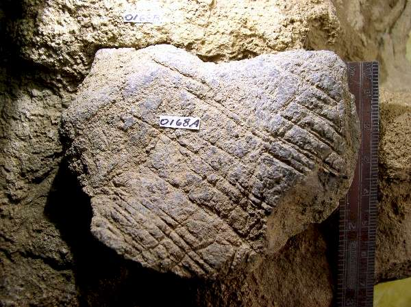 Incised Limestone - Day's Knob Archaeological Site