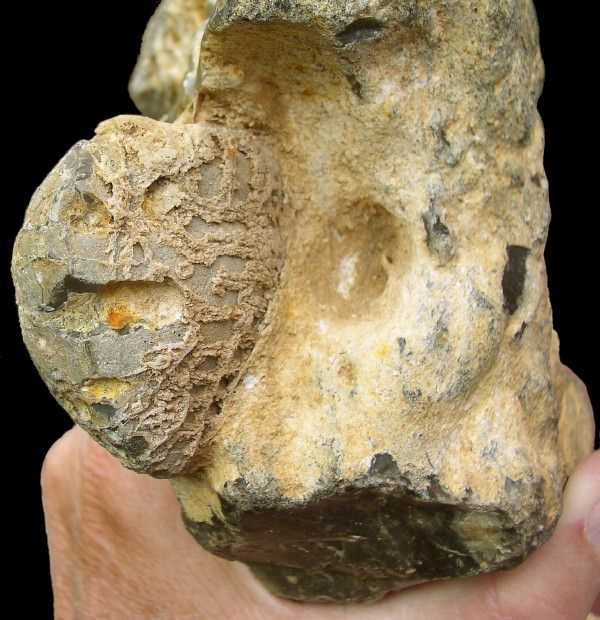 Flint Figure with Echinoid Fossil Inclusion, Groß Pampau, Northern Germany